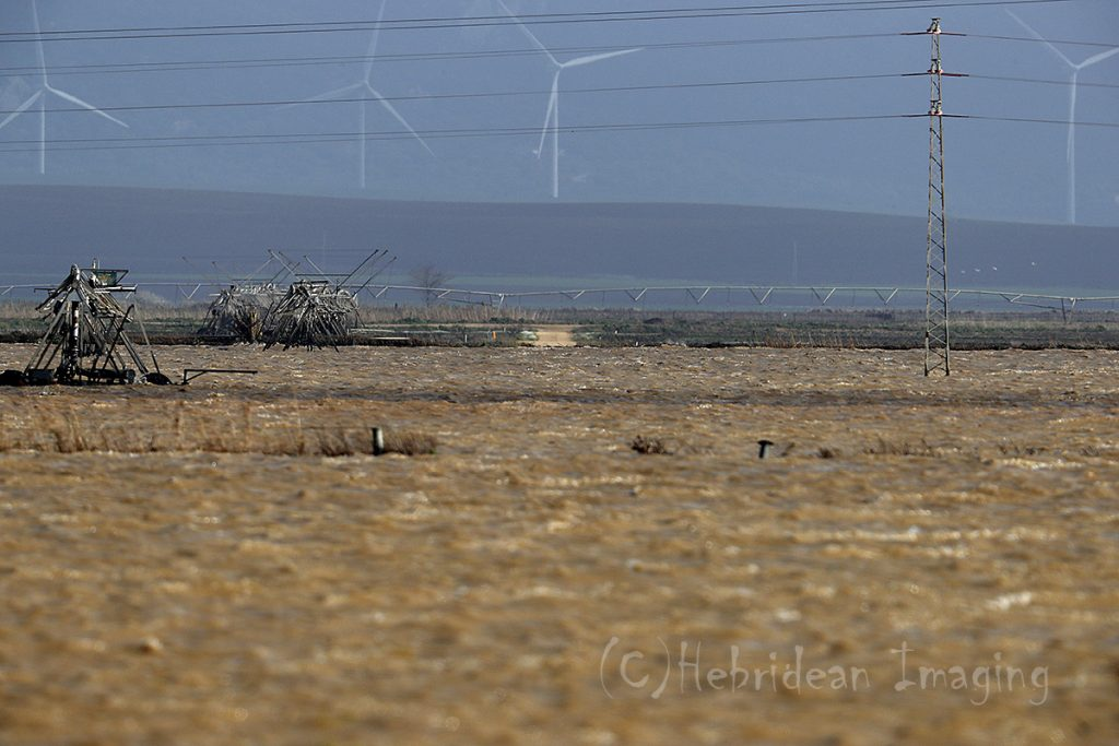 Hebridean Imaging - Yvonne Benting - Bird Photography - Spain - Floods - La Janda
