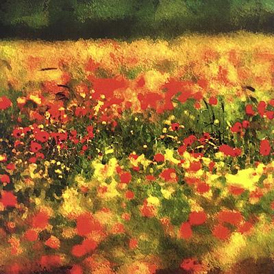 machair flowers hebridean imaging yvonne benting