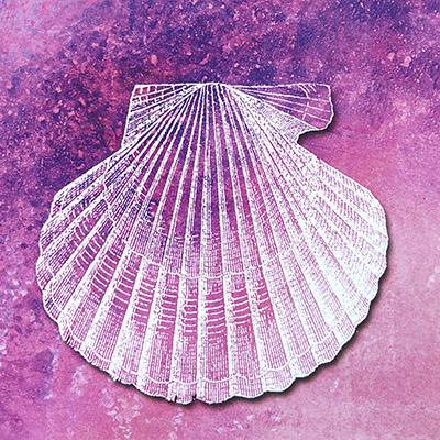 scallop shell camino de santiago hebridean imaging yvonne benting